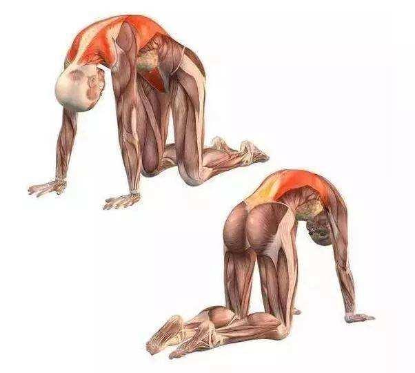 脊柱在瑜伽的练习中是有多么重要?